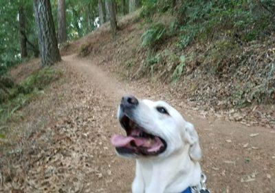 #labradortraining #marindogtraining #barkbusterssanfrancisco