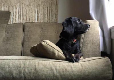 #rescuedogtraining #sanfranciscodogtraining #marindogtrainers