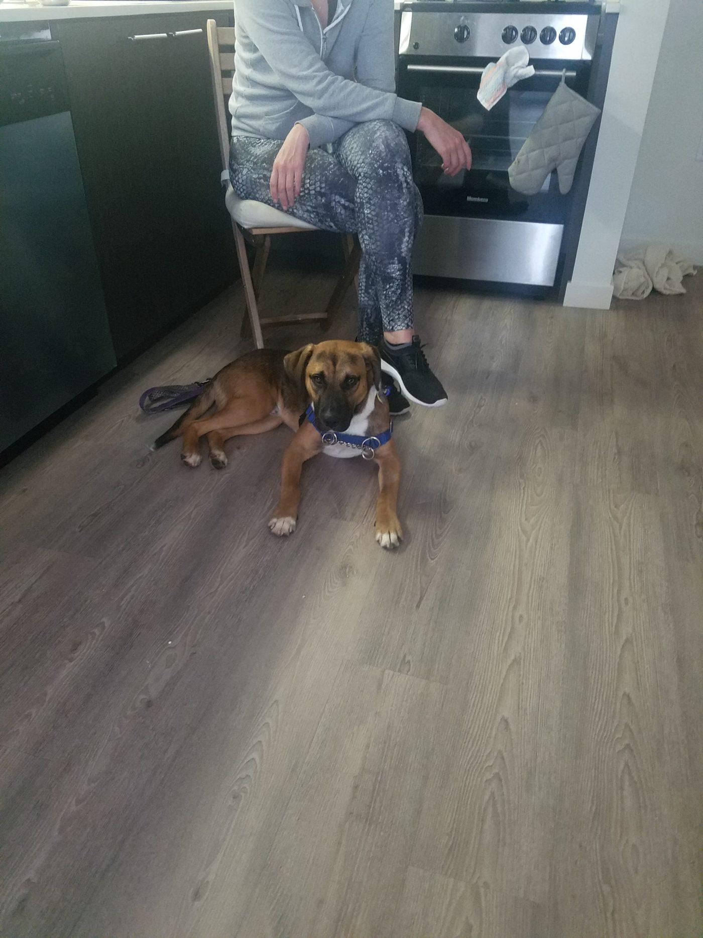#mixedbreeddogtraining #houndmix #bestdogtrainersanfrancisco