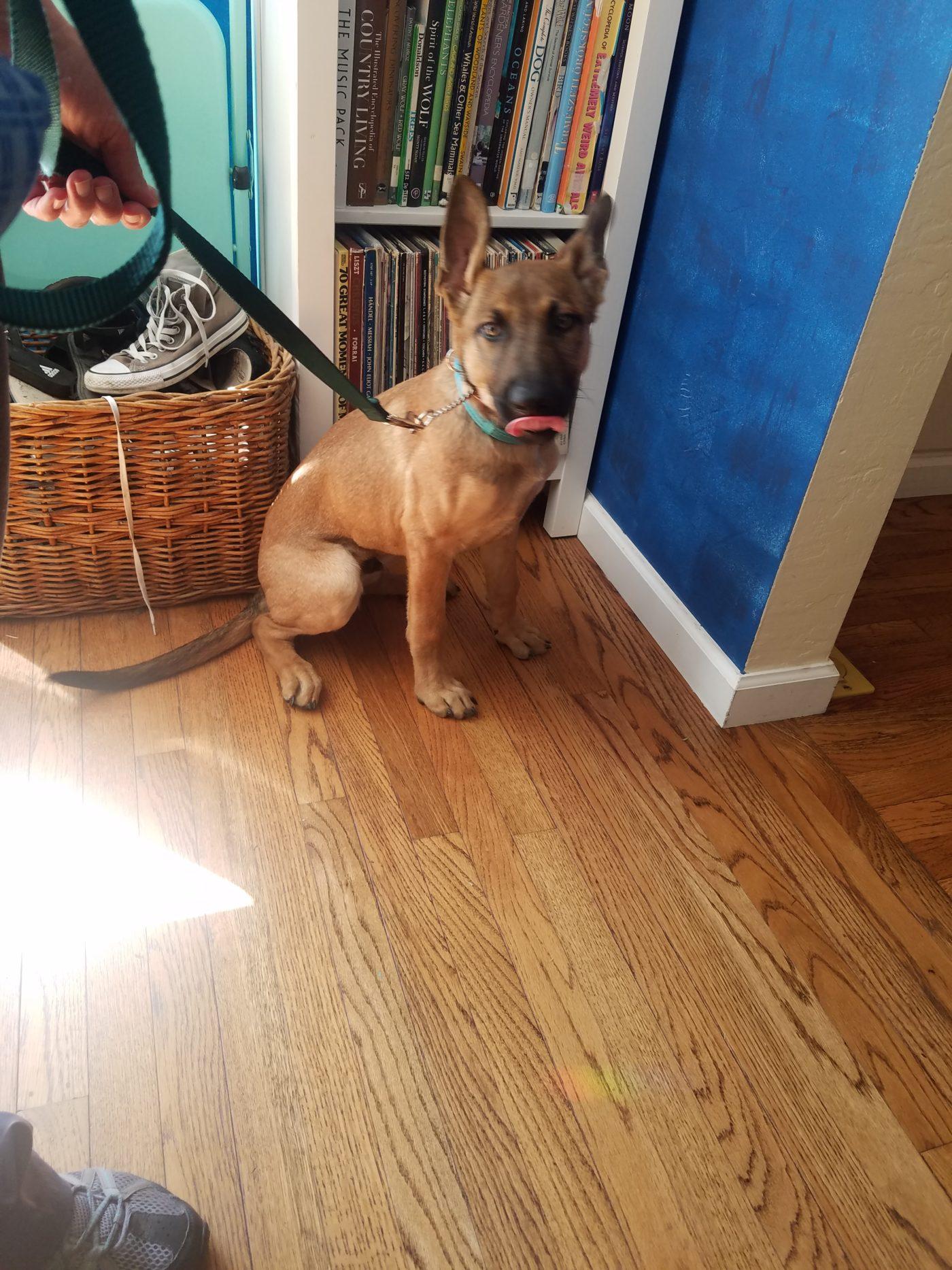 #terrierdogtraining #marindogtrainer #bestsanfranciscodogtraining