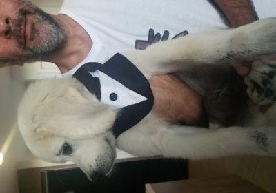 #topdogtrainingsanfrancisco #dogtrainerssanfrancisco #dogtrainingnearme