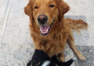 #siblingrivalry #Marindogtraining